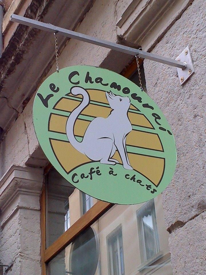 Bar à chats Le Chamouraï